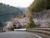 Sakura6_2